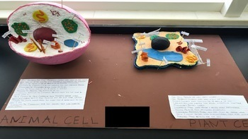 INCREDIBLE 3D PLANT AND ANIMAL CELL – PROJECT