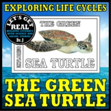 THE LIFE OF A SEA TURTLE (Cut-and-Glue Science)
