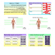 THE MUSCULAR SYSTEM ~ANATOMY~ Digital Resource for Google Classroom~