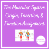 THE MUSCULAR SYSTEM & ORIGIN/INSERTION/FUNCTION ANATOMY UNIT