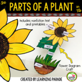 THE PARTS OF A PLANT: Sunflower Paper Craft Activity