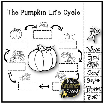 Unforgettable image regarding life cycle of a pumpkin printable