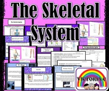 THE SKELETAL SYSTEM (Animated Informative PowerPoint)