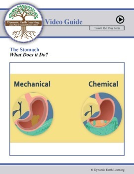 THE STOMACH: FuseSchool Biology Video Guide