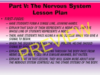 THE HUMAN BODY SYSTEMS UNIT: PART V~THE NERVOUS SYSTEM