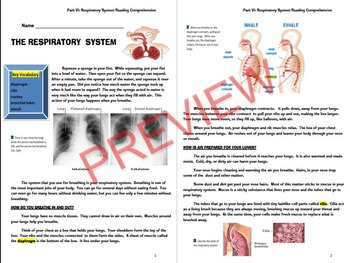 THE HUMAN BODY SYSTEMS UNIT: PART VI~THE RESPIRATORY SYSTEM