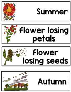 TINY SEED BOOK UNIT