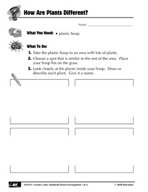 Quick Science Lab: How Are Plants Different?