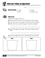 Quick Science Lab: How Can I Make an Egg Grow?