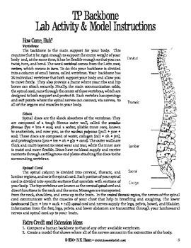 TP Backbone (Human Body)