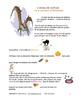 Halloween -Story - L'oiseau de malheur et la sorcière (Version courte)