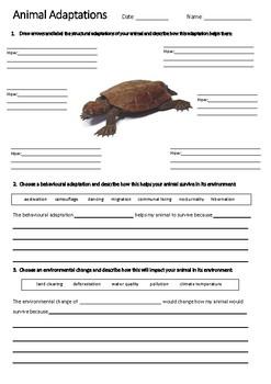 TURTLE Adaptations Worksheet   Year 5 Science (ACSSU043)