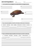 TURTLE Adaptations Worksheet | Year 5 Science (ACSSU043)