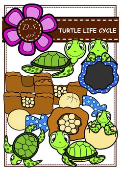 TURTLE LIFE CYCLE Clipart (color and black&white)