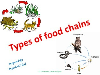 """TYPES OF """"FOOD CHAIN"""""""