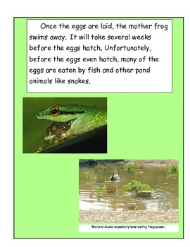 Frogs: The Life Cylce of a Frog (Activities Included)