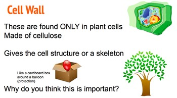 Take a Cell-fie - No Print - 3 Day Science Lessons!