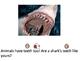Special Education Teeth Unit