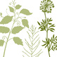 Tall Foliage ClipArt, Digital Stamps, Silhouettes, PNG + Photoshop Brushes