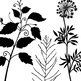 Tall Foliage ClipArt, Digital Stamps, Silhouettes, PNG + P