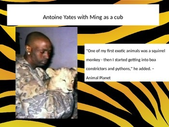 Taming Wild Beasts PowerPoint - Read 180 Stage A