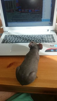 Tankred learns coding