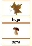 Tarjetas de vocabulario del otoño