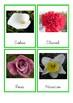 Tarjetas tres partes de Flores