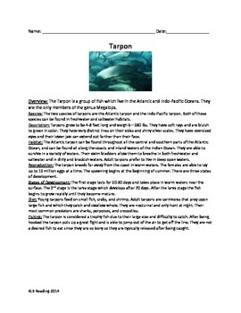 Tarpon - Trophy Fish - Review Article Vocabulary Activity Word Search