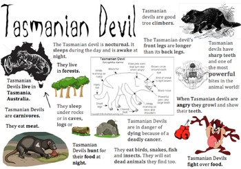 Tasmanian Devil Information Report Visual