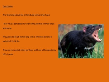 Tasmanian Devil - Power point - information facts pictures endangered