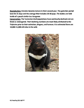 Tasmanian Devil - informational article lesson with questions vocab word search