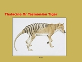 Tasmanian Tiger - Thylacine Power Point Info facts picture