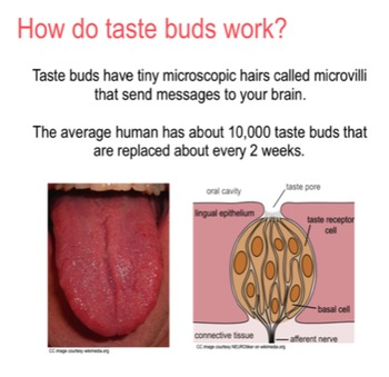 Taste Buds and Saliva SMART notebook presentation