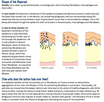 Tattoo Science (The Skin) Reading + Questions (Editable)