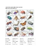 Taxonomic Key Insect and Spider Lab