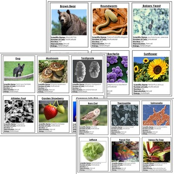 Taxonomy Card Sort or Organism Research Cards