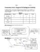 Taxonomy Cladogram & Venn Diagram Activity