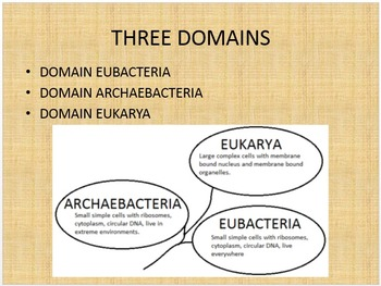 Taxonomy Classification Bundle: Power Point and Chart