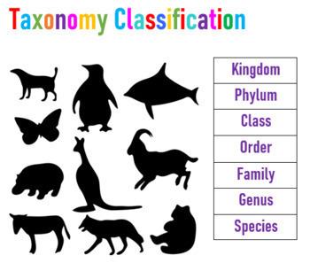 Taxonomy Classification Practice