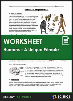 Taxonomy - Humans - A Unique Primate