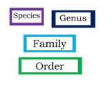 Taxonomy Levels of Classification Bulletin Board Graphic O