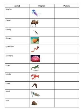 Taxonomy Phylum Kingdom Exercise Worksheet Game by Jenny Trump | TpT