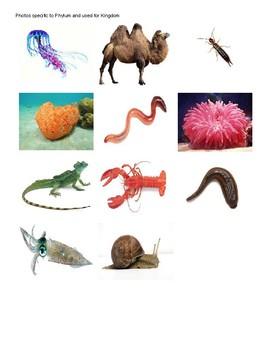 Taxonomy Phylum Kingdom Exercise Worksheet Game
