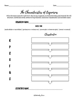Classification Of Organisms Worksheet Answers - Nidecmege