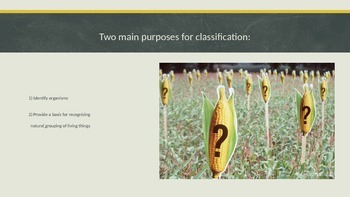 Taxonomy and Classification
