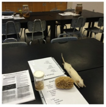 Taxonomy and Classification Lab