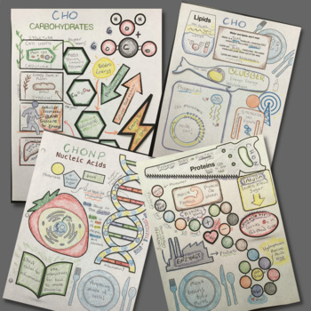 Teach Biomolecules with Doodle Notes