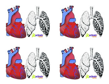 Teaching Circulatory & Respiratory Systems in P.E.: Circ. & Resp. Image Cards