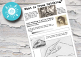 Teaching Cross Hatching (Drawing Skills)